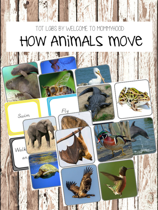 Montessori inspired walk, swim, fly animal sorting printables