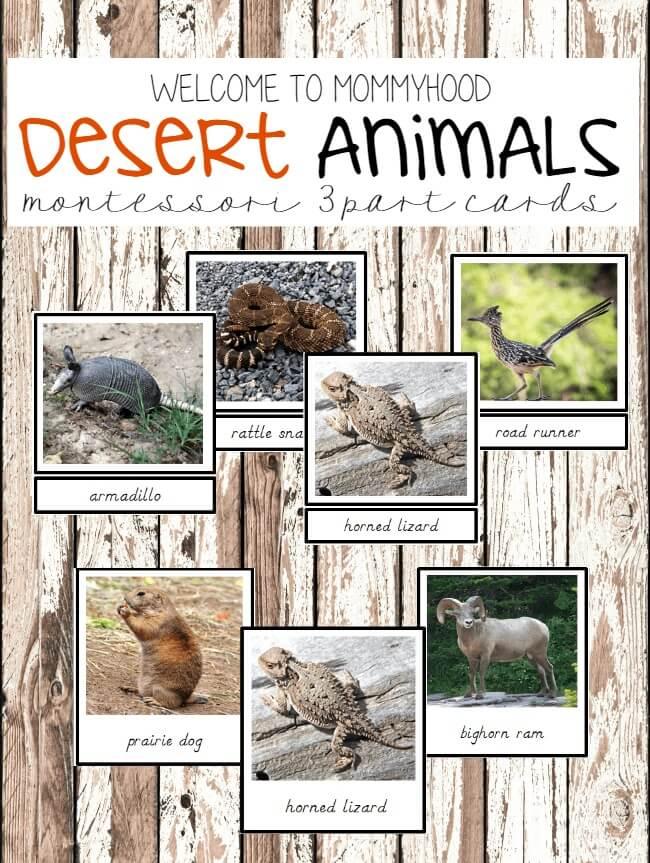 Desert Animals 3 part cards