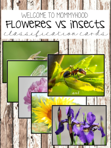 Montsesori Classification Cards Insect versus flowers sorting cards
