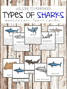 Montessori printables Shark 3 part cards