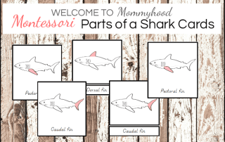 Shark activities: Montessori parts of a shark printables.