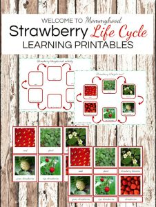 Montessori activities: Strawberry life cycle #montessori #montessoriactivities
