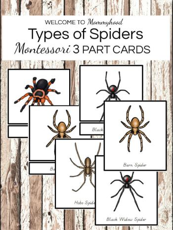 Montessori Types of Spiders 3 Part Cards - perfect for Halloween, for science activities, or for learning about different kinds of spiders. Comes with 13 types of spiders cards. Get them now to create your own Montessori activities!