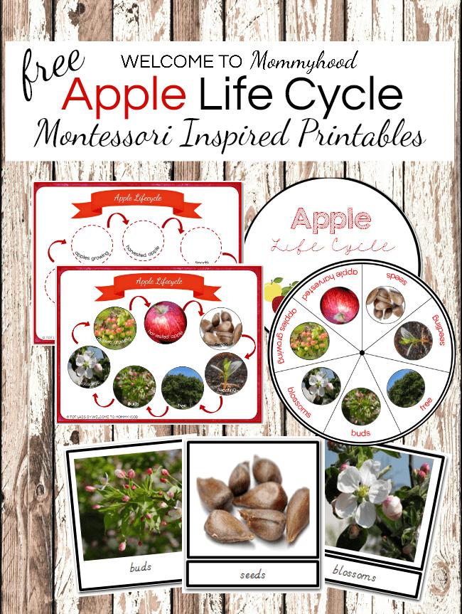 Montessori Apple Life Cycle Printables