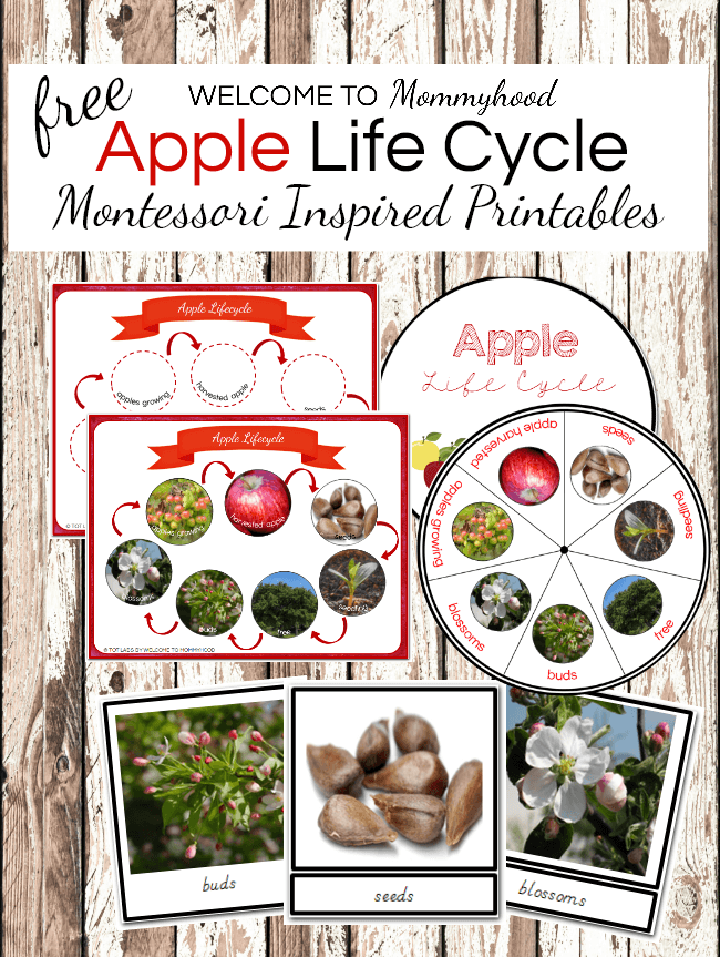 Montessori Apple Life Cycle Printables