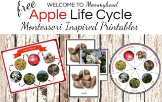 Apple Life Cycle Printables