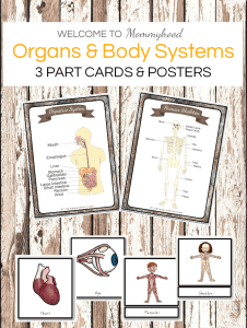 human body 3 part cards and posters