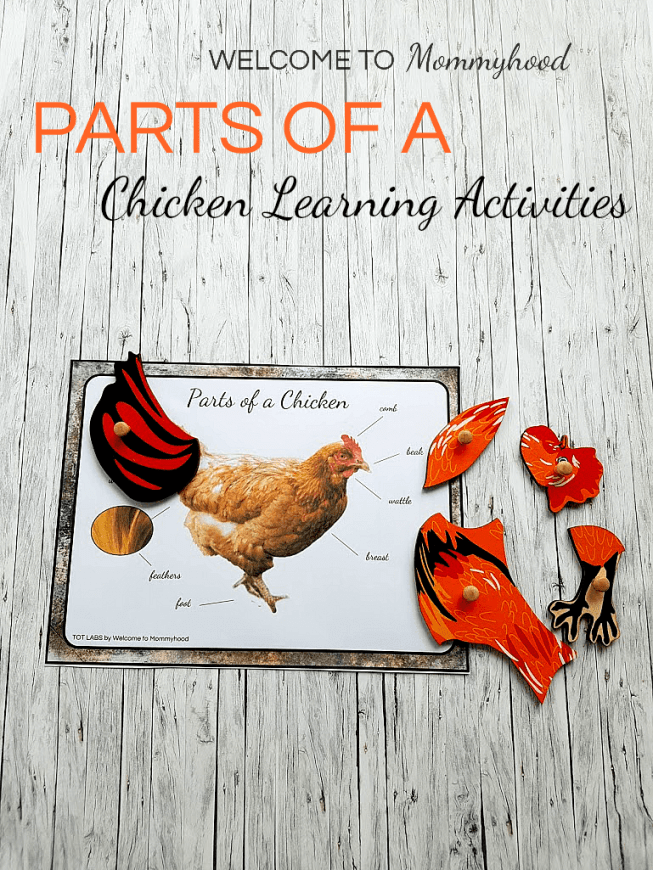 Montessori Chicken Life Cycle Printables