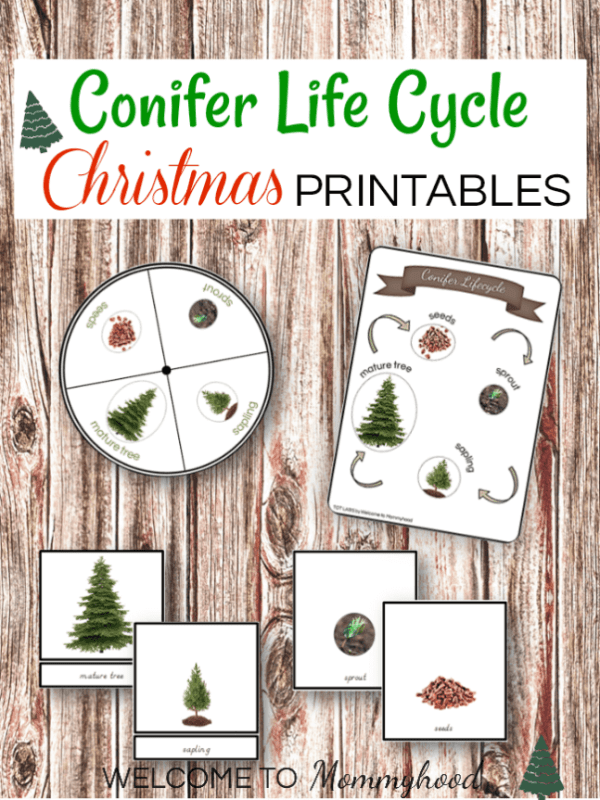 Montessori Life Cycle of a Conifer Printables