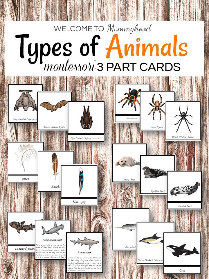 Types of animals Montessori 3 part cards