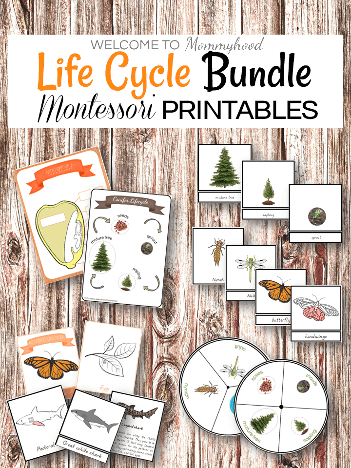 Montessori Life Cycle Printables Bundle