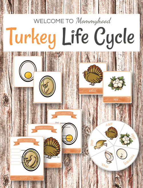 Montessori Inspired Turkey life cycle printables #thanksgivingprintables #thanksgivingactivities