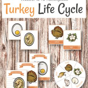 Montessori Inspired Turkey life cycle printables #thanksgivingprintables #thanksgivingactivities