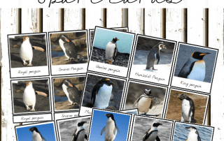types of penguins 3 part cards