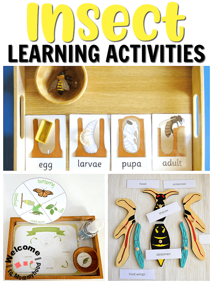 Montessori Insect Learning activities
