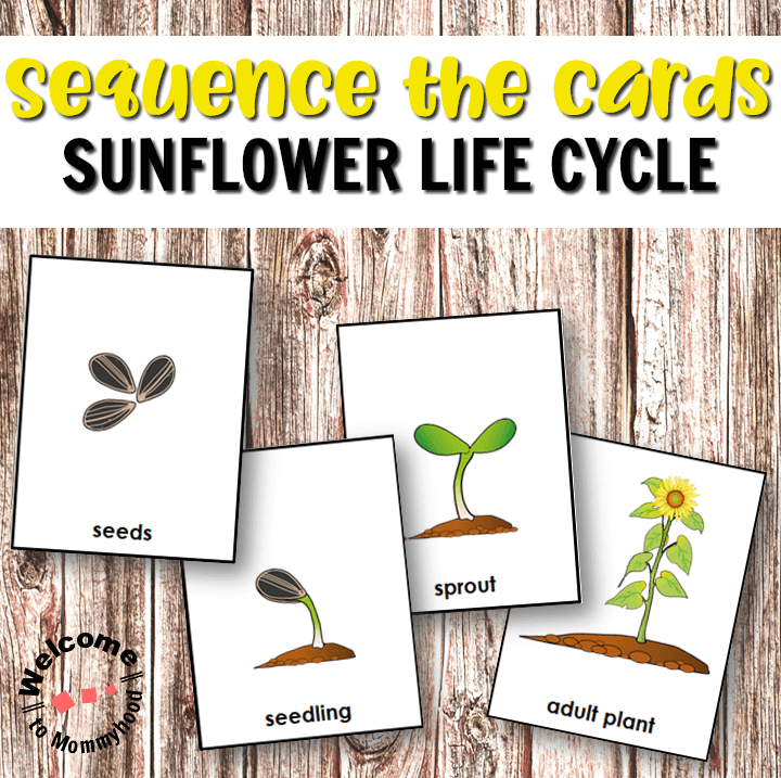 image regarding Plant Life Cycle Printable identify Sunflower Everyday living Cycle Printables for Palms-upon Routines