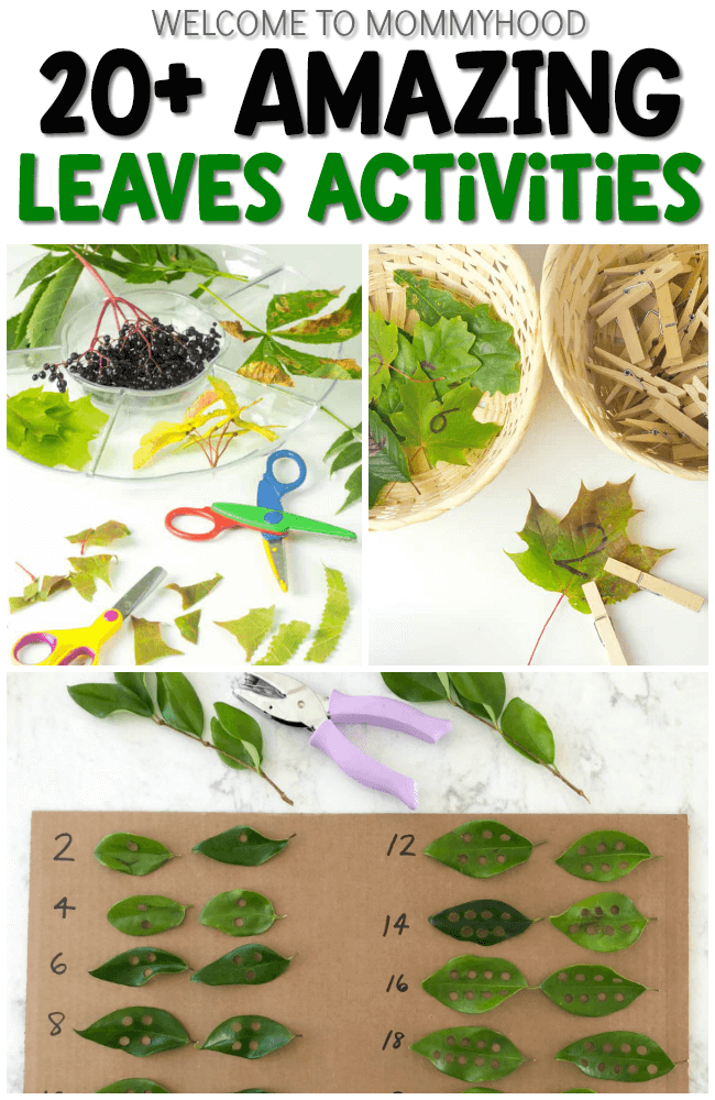Leaves Preschool Activities