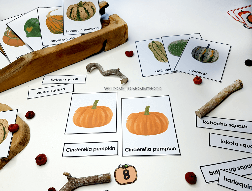 Use these pumpkin 3 part cards to create amazing hands-on learning activities with a pumpkin theme! Perfect for kindergarten or Montessori classrooms!
