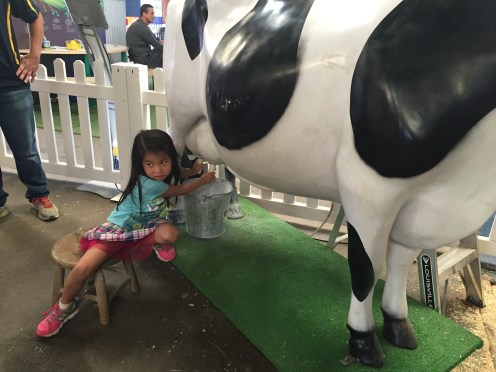 """Milking a """"cow"""" at the State Fair"""