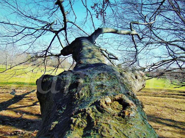Branch Path