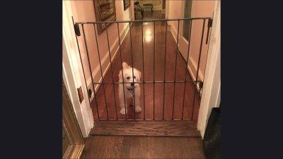 odd-dog-gate2018