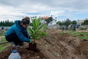 planting trees in permaculture project in Portugal