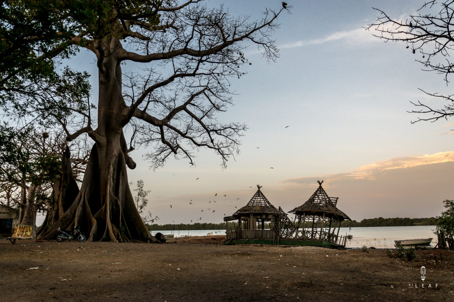 What to do in Gambia.
