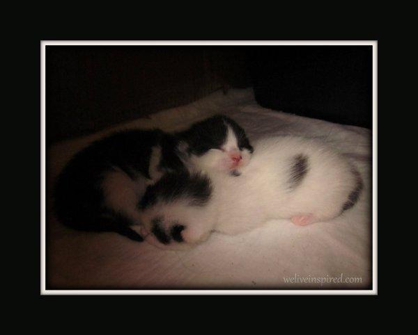 Newborn Kittens by weliveinspired