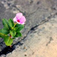 An Unlikely Bloom - Inspirational Poetry by Rebekah