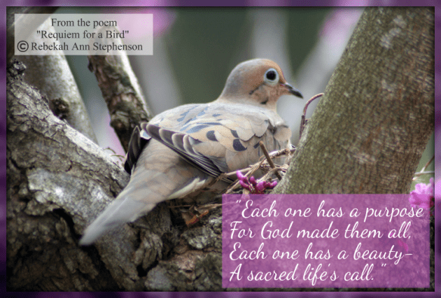 Mourning Dove Bird and Poem Bird Quote