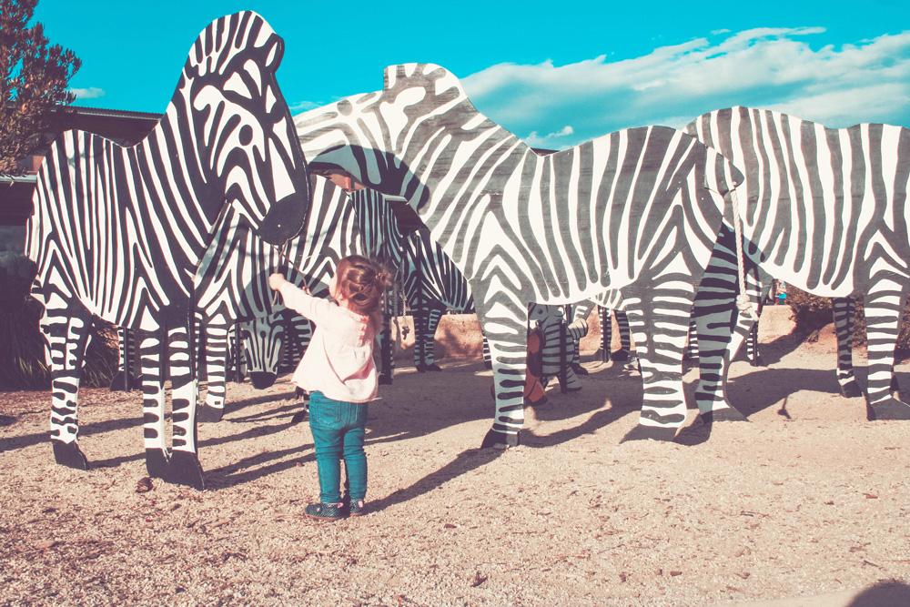feed_zebras