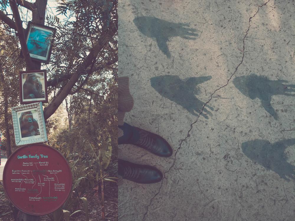 gorilla_feet