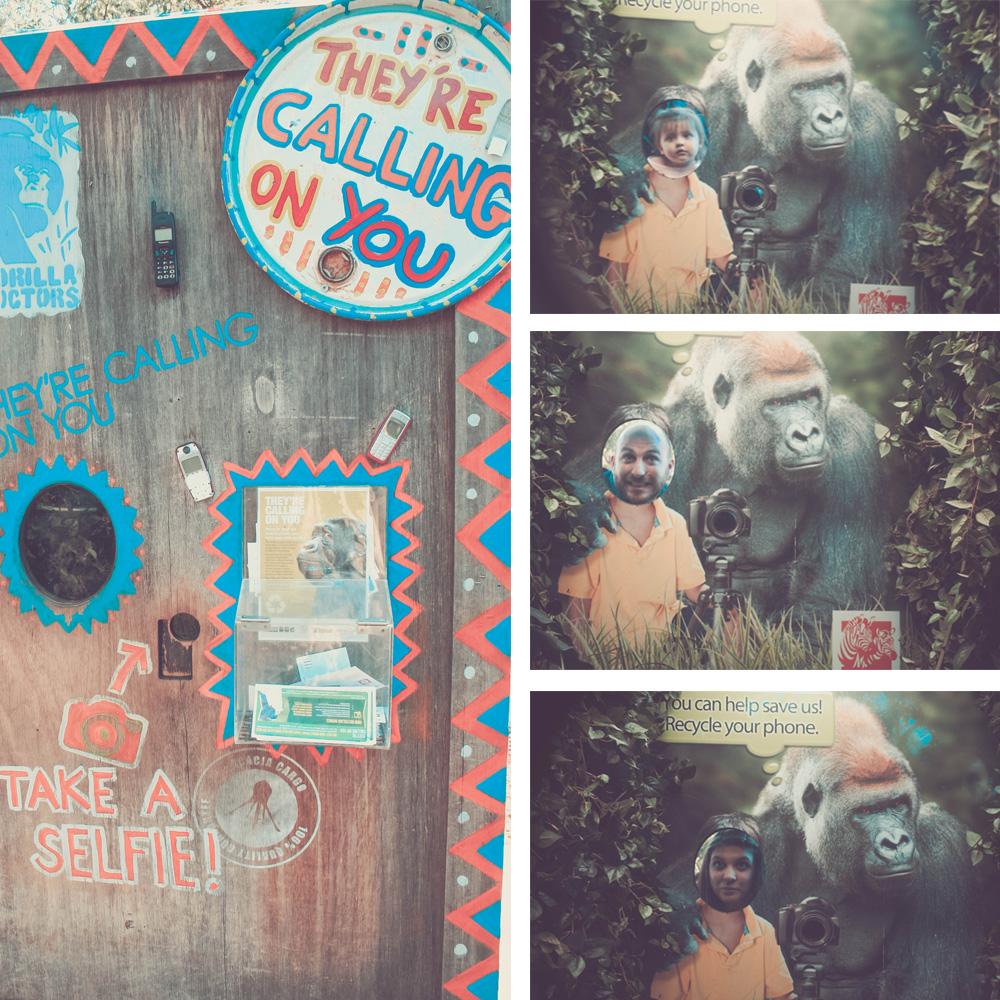 gorilla_selfie_save