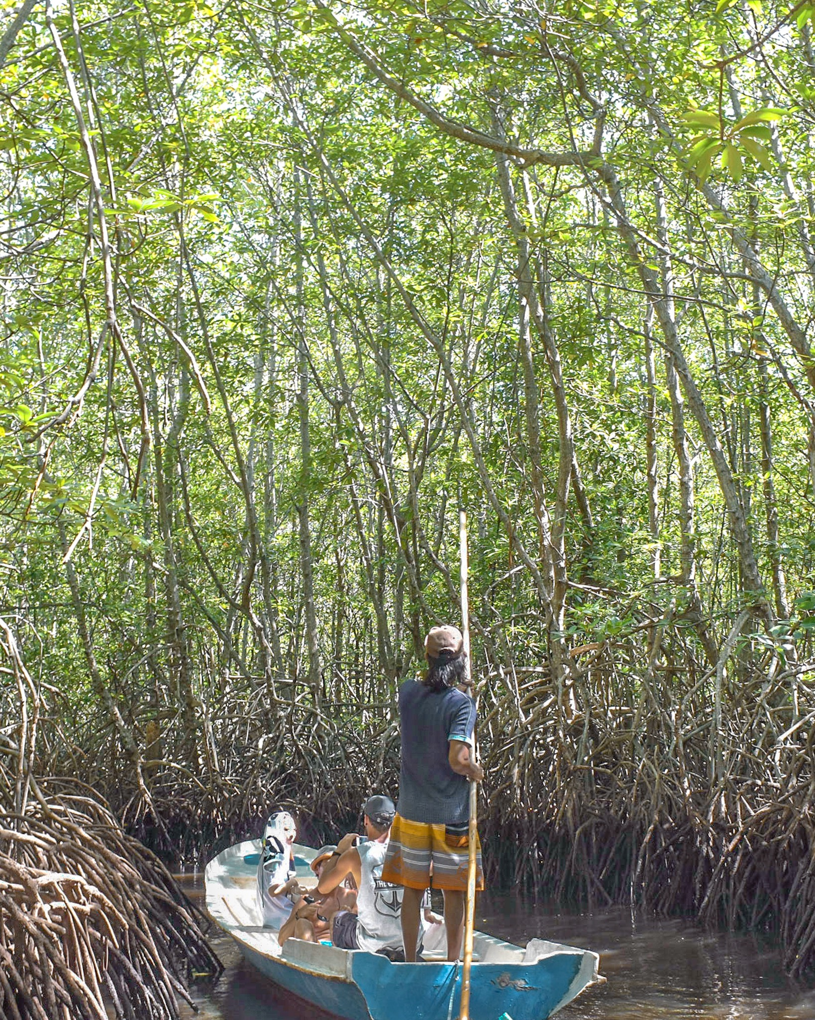 Mangrove Tours on Lombok Island