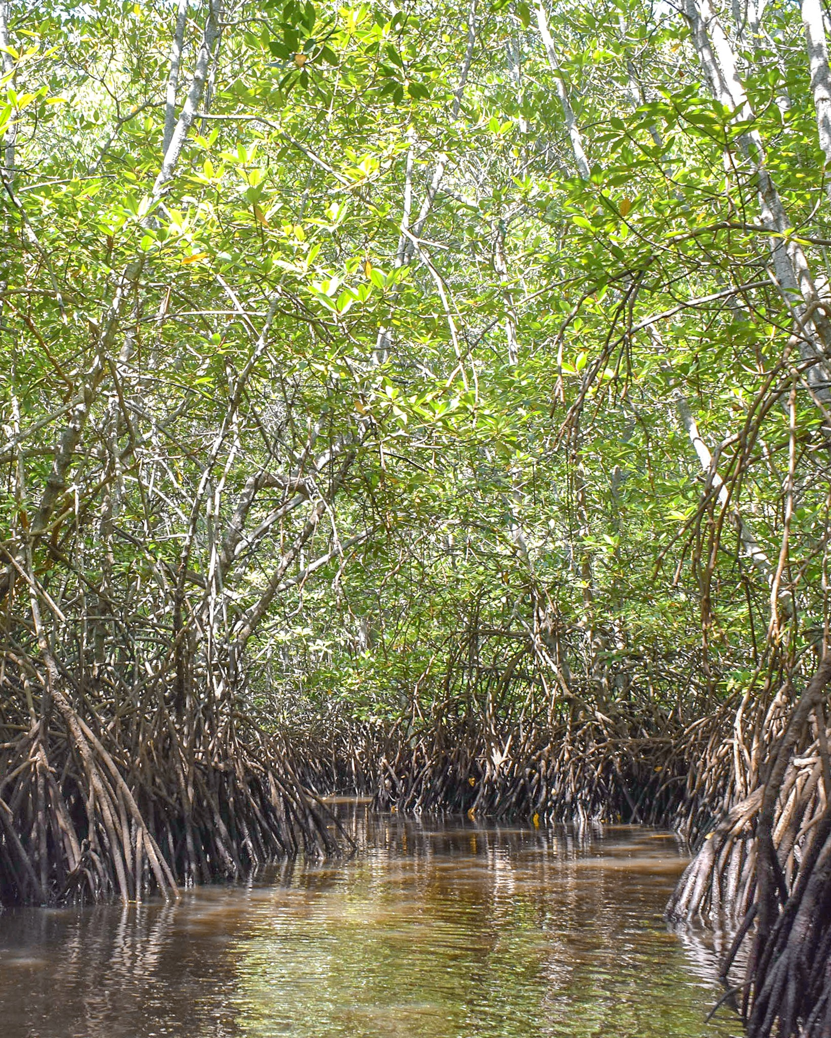 Mangrove Forest on Lombok Island