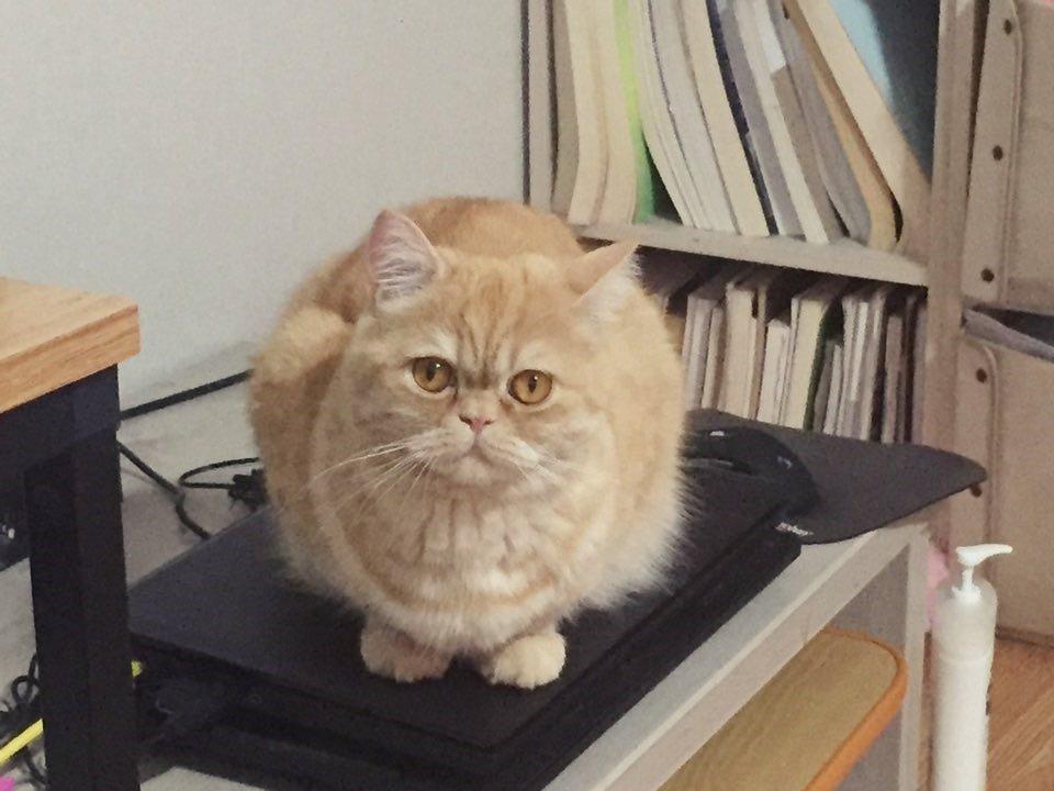 고양이 스케일링 후기 1편