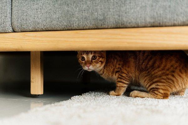 고양이와 친해지는 법(고양이 안정시키기)