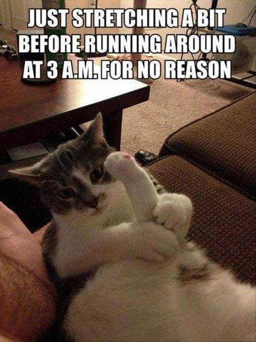'집사'를 영어로 하면? 고양이 관련 용어 – 영어편