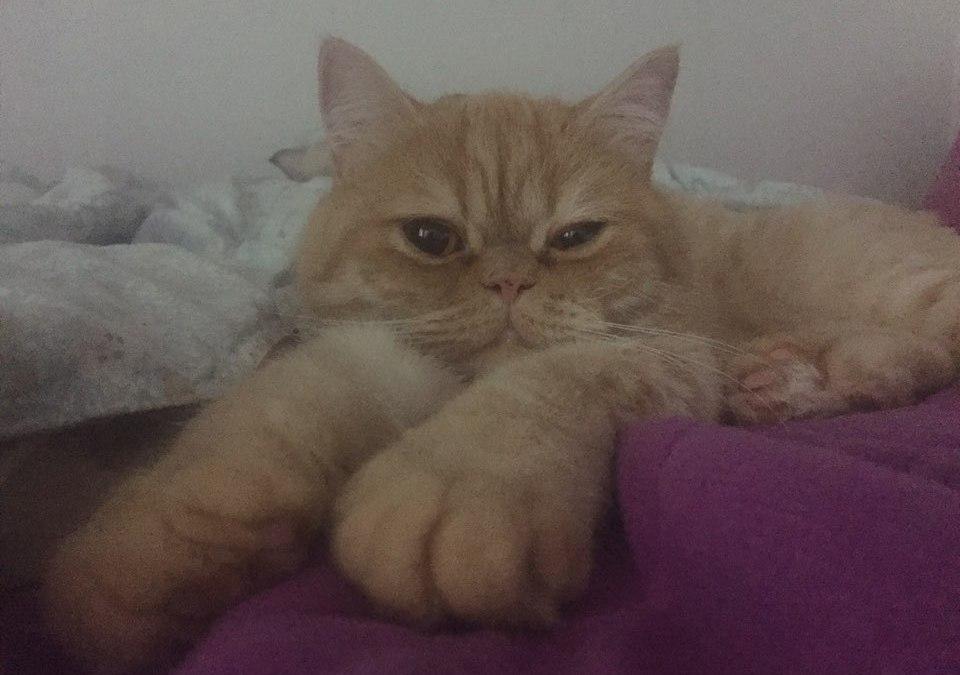 무라카미 하루키, 장수 고양이의 비밀