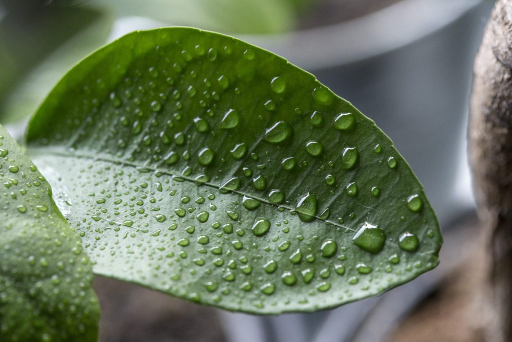 humidity to reduce viruses