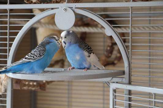 Briciolino und Violetta