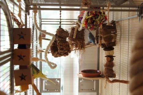 Blick in den Vogelkäfig