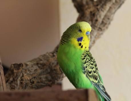 Numidio hieß früher Coco - er trägt daher einen Doppelnamen: Numidio Coco Quadrato