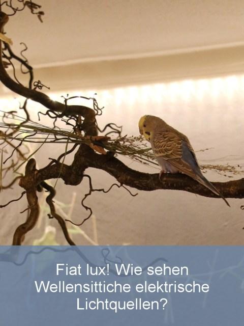 wellensittiche-blog-beleuchtung-im-freiflugzimmer-teaser