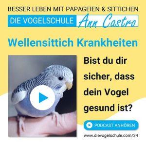 Wellensittiche Blog Podcast Teil 3 Krankheiten ann castro und wencke sabrina schacht