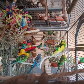 Wellensittiche Blog Produktempfehlungen Spielzeug1