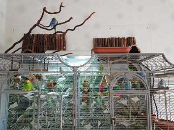Wellensittiche Blog Neues Vogelzimmer Käfig Voliere