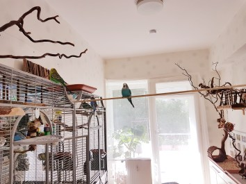 Wellensittiche Blog Neues Vogelzimmer 6