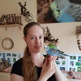 Wellensittiche Blog Produktempfehlungen Vogelzimmer Wellensittich