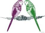 Wellensittiche Blog Psittia Shop für Wellensittichfans Filuzzo magenta & gruen gespiegelt auf Krisellinie